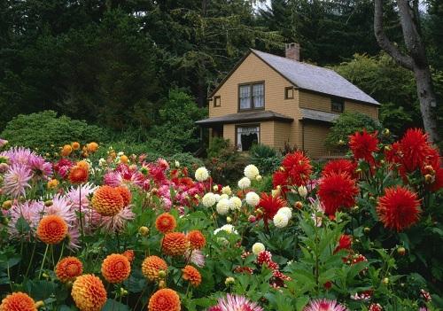 Борьба с вредителями растений с помощью растений